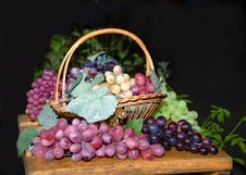 Free Composition From Different Grades Of Grapes Royalty Free Stock Photography - 4886687