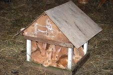 Free Hares In A Small House Stock Image - 4886741