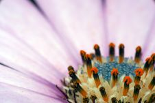 Free Flower Center Stock Photo - 4887840