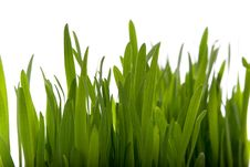 Free Spring Grass Isolated Stock Image - 4888771
