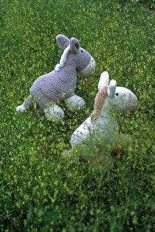 Free Little Donkey Stock Photo - 4889290