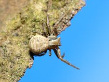 Free Spider On Tree Royalty Free Stock Photography - 4889517