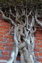 Free Root Of The Tree. The Roots Of The Tree Were For A Royalty Free Stock Photo - 48825315