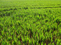 Free Grass Growing In A Field Stock Photo - 4899990