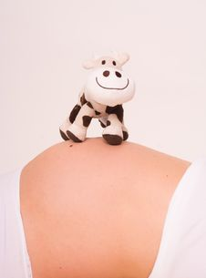 Free Pregnant With Cow Stock Photo - 4890950