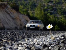 Free Daisy On Road Stock Photos - 4891143