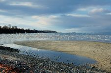 Free Gulls On The Seaside Royalty Free Stock Photos - 4891898