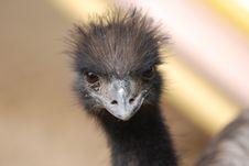 Free Cool Bird Royalty Free Stock Image - 4892986