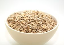 Free Sunflower Seeds Stock Photo - 4893920
