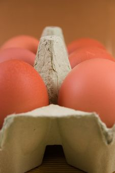 Free Eggs Stock Images - 4894144