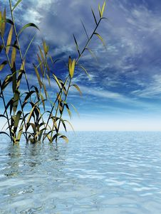 Free Water Plants Royalty Free Stock Photo - 4894655