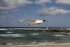 Free The Sea Seagull Stock Photo - 4895120