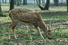 Free Beautiful Deer Stock Images - 4895774