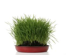 Free Green Fresh Grass Stock Photography - 4895782