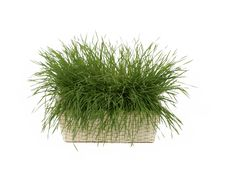 Free Grass In A Basket Stock Images - 4895784