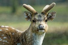 Free Beautiful Deer Stock Photography - 4895842