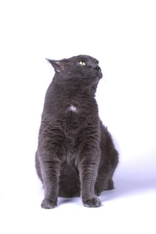 Free Cat Stock Image - 4897071