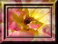 Free Decorative Framework Royalty Free Stock Image - 4897416