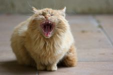 Free Tired Cat Stock Images - 4897654