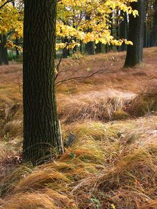 Free Fall Forest 02 Royalty Free Stock Images - 4898179