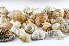 Free Seashell Royalty Free Stock Photo - 4898485