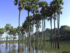 Free Myanmar, Popa Hill S Vegetation Stock Image - 4898691
