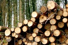 Free Wooden Logs Royalty Free Stock Images - 4899609