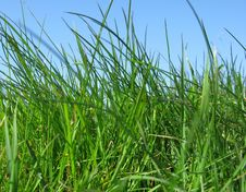 Free Grass And Sky Stock Image - 4899881
