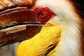 Free Hornbill Stock Image - 495401