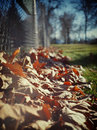 Free Fallen Leaves Stock Photo - 498080