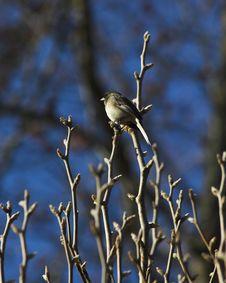 Bird Perched Royalty Free Stock Photos