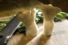 Free Trumpet Mushroom Duo Stock Images - 491714