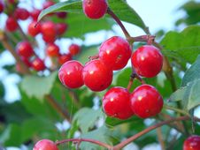 Berry Red Stock Images