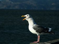 Seagull Talking Royalty Free Stock Images