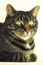 Free Portrait Of A Cat Royalty Free Stock Images - 4905959