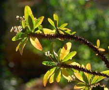 Free Myanmar, Pindaya: Thorny Vegetation Stock Photos - 4901283