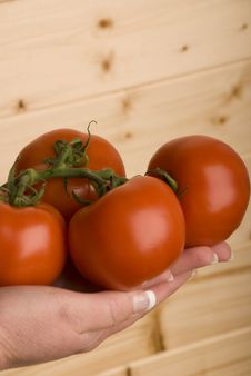 Hand Holding Four Organic Tomatoes Stock Photos