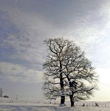 Free Winter Tree 01 Stock Image - 4901321