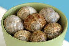 Free Snail Shell Royalty Free Stock Photography - 4901707