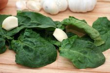 Free Fresh Spinach Royalty Free Stock Photography - 4901787