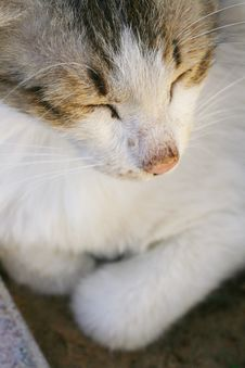 Free Cat Sleeping Royalty Free Stock Image - 4903866