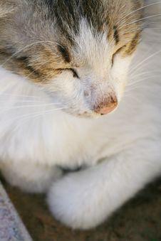 Free Cat Sleeping Royalty Free Stock Image - 4903866