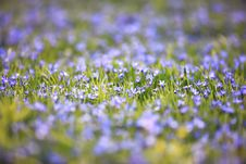 Free Spring Meadow Royalty Free Stock Photography - 4906037