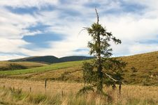 Free Pine Tree Against Rolling Landscape Stock Photo - 4906700