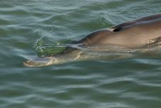 Close Shot Of A Dolphin Royalty Free Stock Images