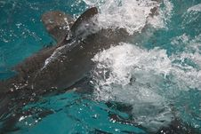 Free Shark Attack Royalty Free Stock Photo - 4906965