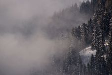 Free Fir Trees And Cloud Stock Images - 4907174