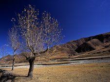 Free Trees Royalty Free Stock Photos - 4908788