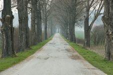 Free Alley Of Treesroad Stock Photo - 4909990
