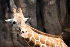 Free Giraffe Stock Photography - 4910282